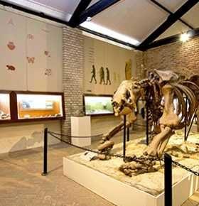 2020_12_27_Paleontologia_Museus