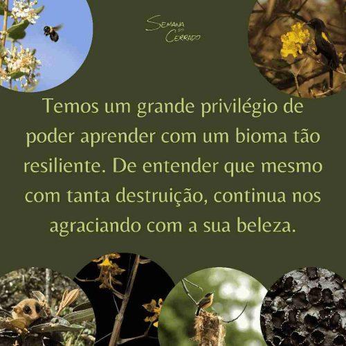 2021_09_14_Notícia_Semana-do-cerrado_img3