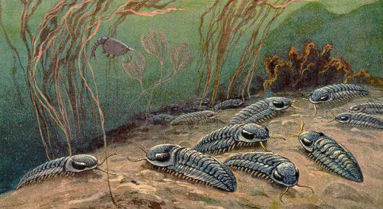 In memoriam Heinrich Harder (1858-1935) - Trilobitas