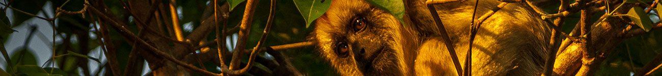 fundo_primatas